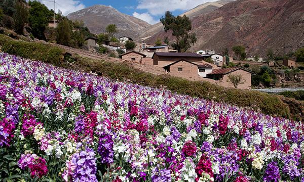 Tarma ciudad de flores