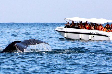 Atractivos turísticos en Tumbes: Avistamiento de ballenas y delfines