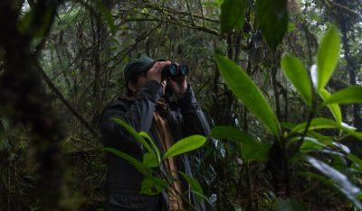 Área de Conservación Regional (ACR) Bosques El Chaupe, Cunía y Chinchiquilla, ubicada en la provincia de San Ignacio, en Cajamarca