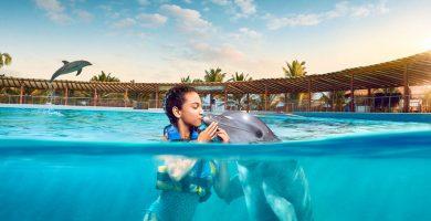 Viaja a México y nada con delfines en Los Cabos