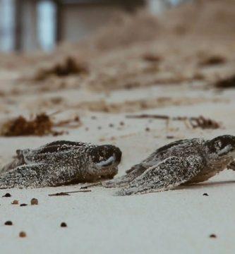Hard Rock Hotel & Casino Punta Cana fortalece acciones de desarrollo sostenible y pone en marcha programa de conservación de tortugas marinas
