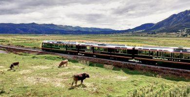 Inca Rail entre los mejores trenes de lujo en Sudamérica