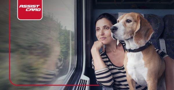 las mejores recomendaciones para viajar con mascotas