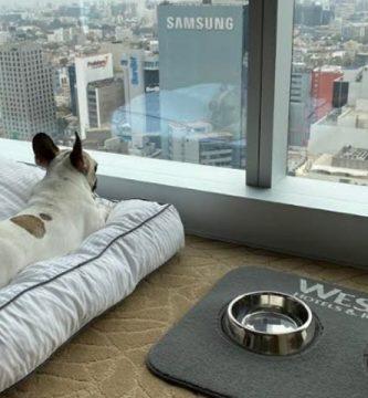 opciones petfriendly para vacacionar con perros en Lima